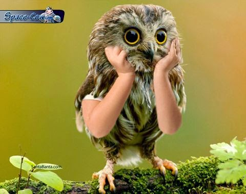 funny cute owl picture