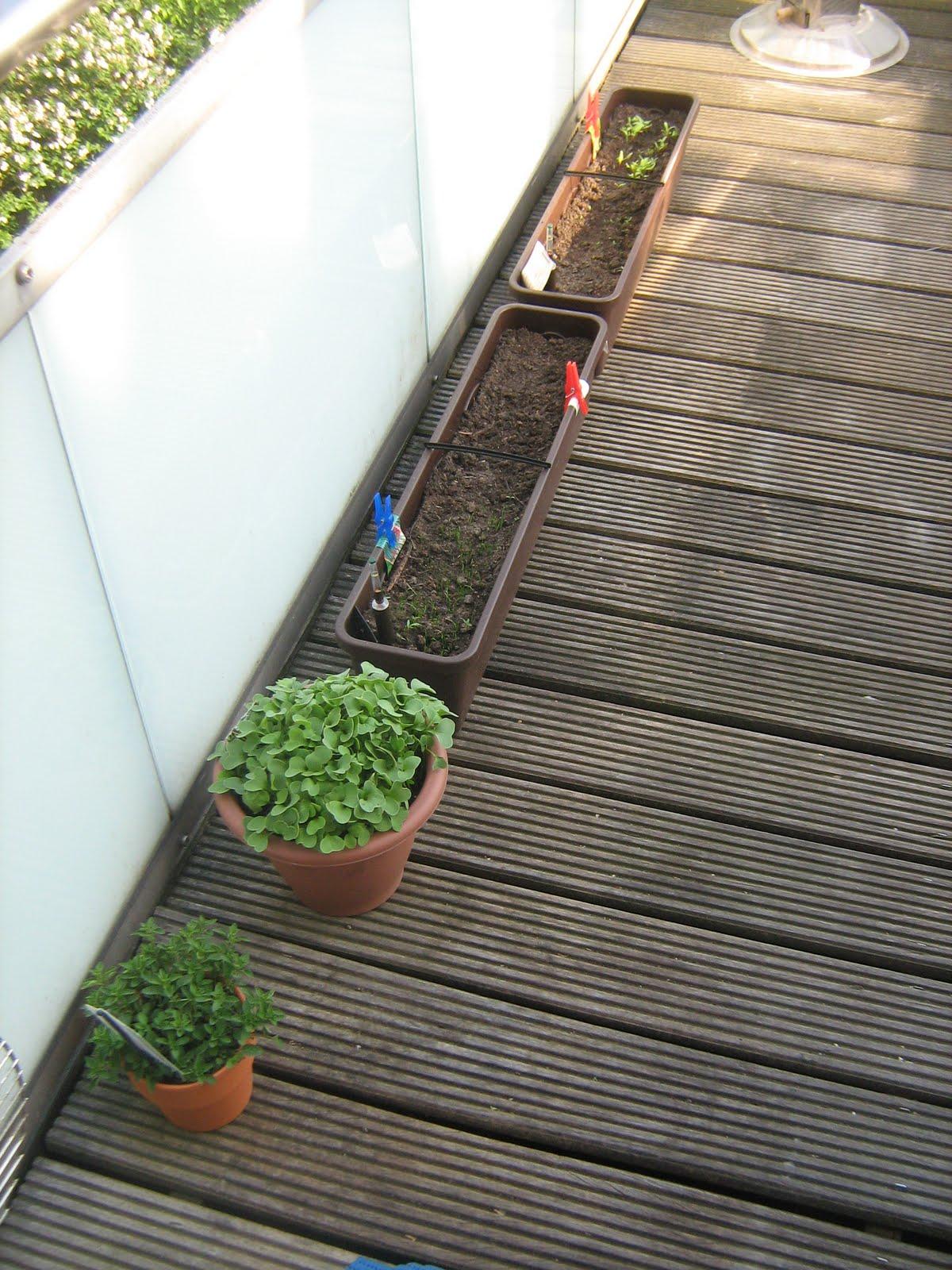 kr uterbalkon weitere wachstum und die umgepflanzten flei ig wachsenden radieschen. Black Bedroom Furniture Sets. Home Design Ideas