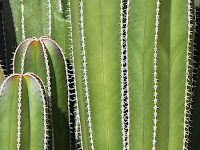 7 Benefits of Cactus for Our Life
