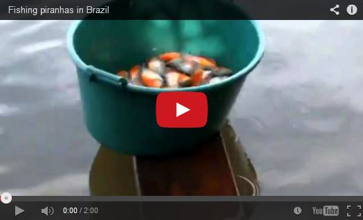 http://kimedia.blogspot.com/2014/10/fishing-piranhas-in-brazil.html
