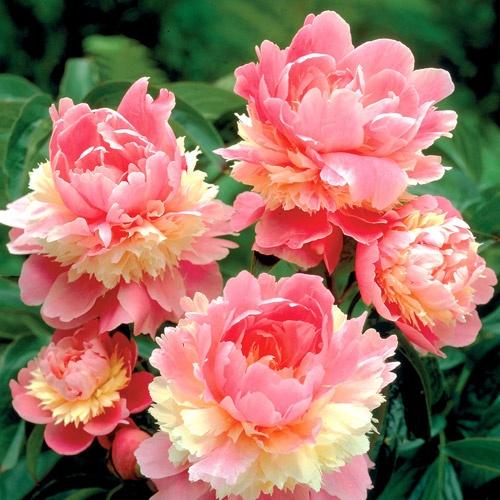 Beautiful yellow rose gardens - A Few Luscious Flowers For Your Garden