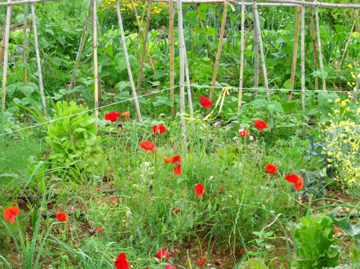 Huerto jardin ecologico l hort de les flors una nueva for Concepto de plantas ornamentales