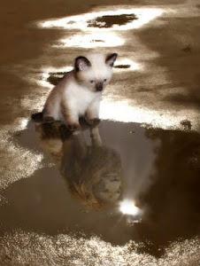 Отражение котёнка