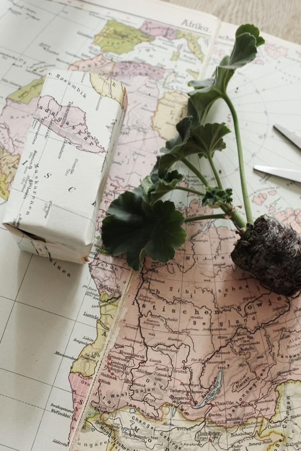 använda karta till att göra egna krukor, pelargoner, sticklingar, plantera egna sticklingar, diy krukor, diy karta