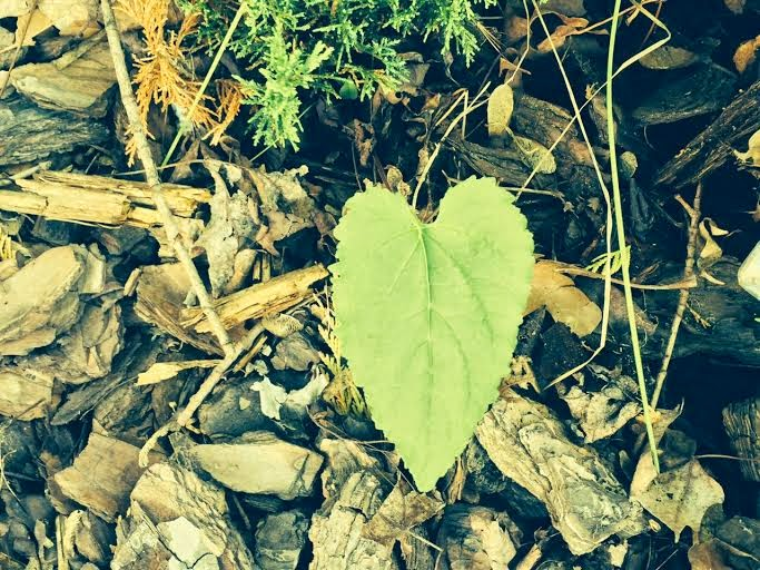one heart leaf
