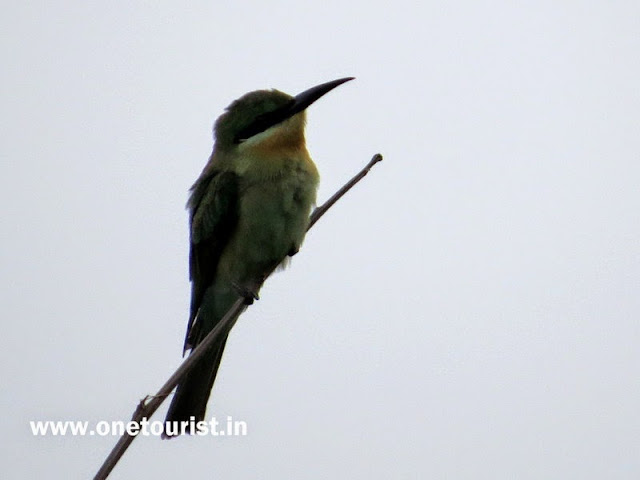 Bird image , picture , photos , photography , Sh87 , UP