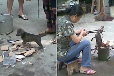 Wanita China memanggang anak anjing hidup-hidup