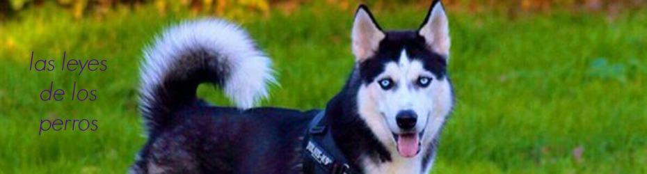 las leyes de los perros