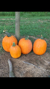 Look at these beautiful pumpkins!