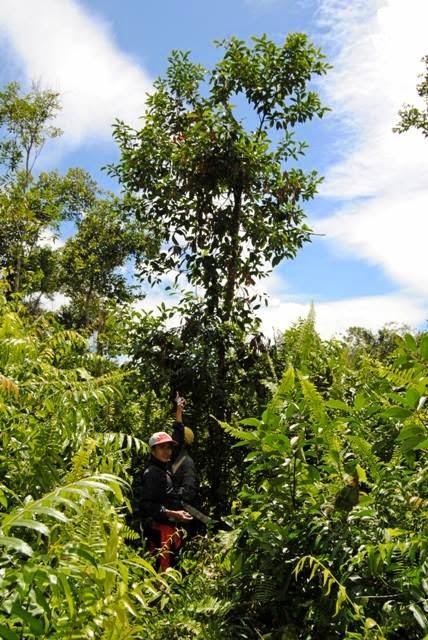 Temuan Orangutan Kalsel, Kabar Gembira Yang Menyedihkan