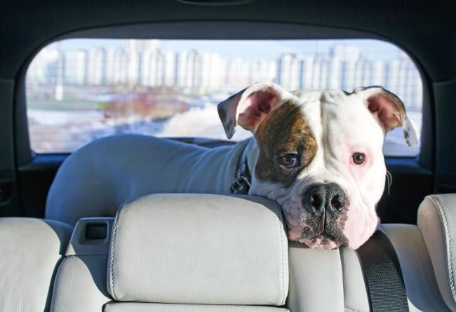 Czy przeprowadzka stresuje psa?