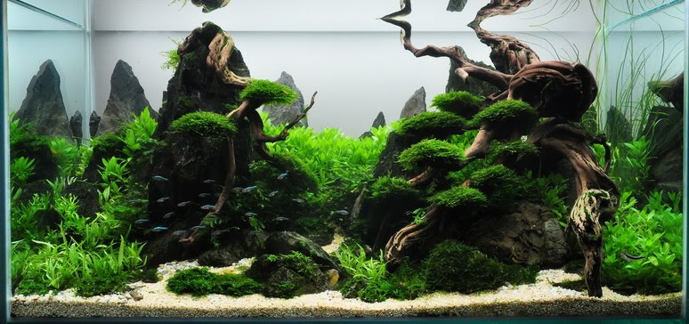 Aquascape Title Frog Mountain Name (Country) Wei Cheong Chung (Malaysia)  Tank Size (WxDxH) 90 X 45 X 45 Cm Tank Volume 182 L. Fertilization ADA  Brighty K