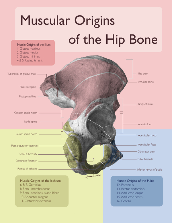 Hannah Ahn Fire!: Hip Bone Hank and My Adventures in Anatomy