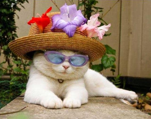 Fakta Unik Soal Kucing Anggora Persia