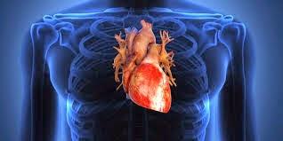 Menjaga Kesehatan Jantung dengan Protein