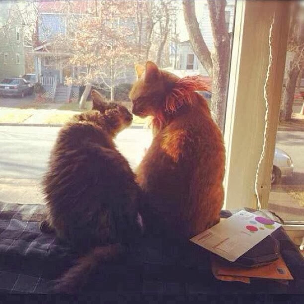 Funny cats - part 91 (40 pics + 10 gifs), two cat kissing