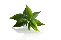 """""""green-tea-teh-hijau-teh-peluntur-lemak-pelangsing-alami-diet-atasi-obesitas-kegemukan-acai-plus-formula-pelangsing-seksi-nasa-natural-nusantara-inti-herbalindo-distributor-produk-kesehatan-nasa"""""""