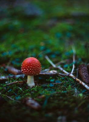 how to photograph toad stools