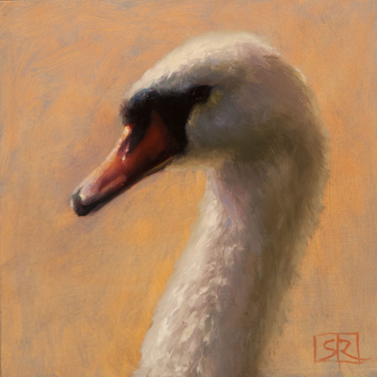 Mute swan portrait, oil painting, ornithological art, Shannon Reynolds