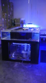 Giant aquariums huge 350 gallon acrylic saltwater for 150 gallon fish tank for sale craigslist