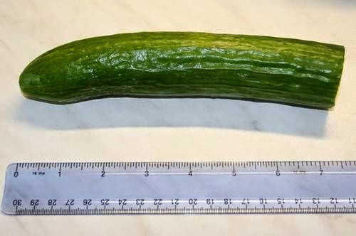 what does a 7 inch penis look like
