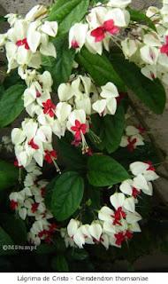 vidadasflores.blogspot.com