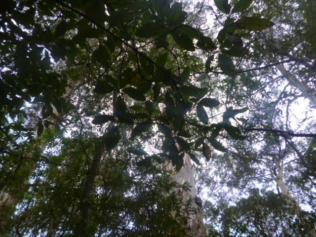 Cape Otway Jungle