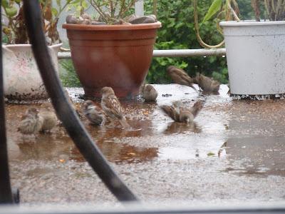 Happy sparrows 4