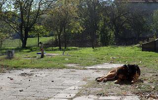 Sunbathing Rambo