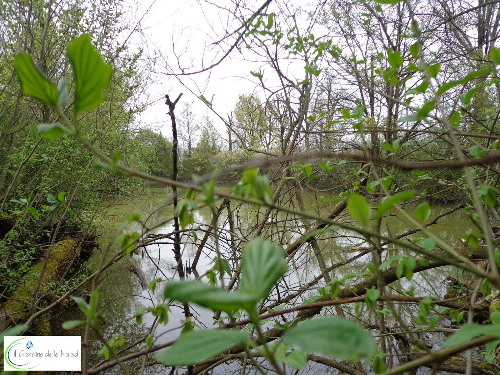 Il giardino delle naiadi abitanti dello stagno idrofilo for Ecosistema dello stagno