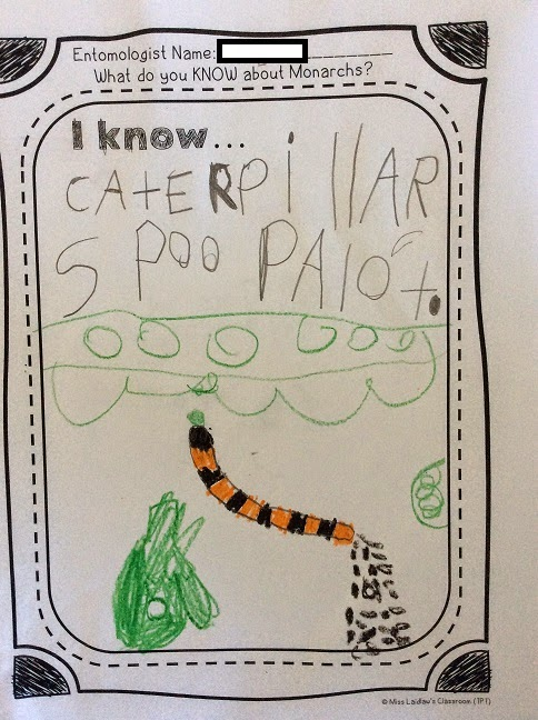 What do you KNOW about Monarch caterpillars? KWL Chart for Primary learners.