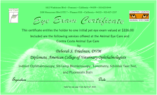 Neon green gift certificate from Animal Eye Care detailing the services included in an eye exam from them, along with images of a cat's and dog's eye.