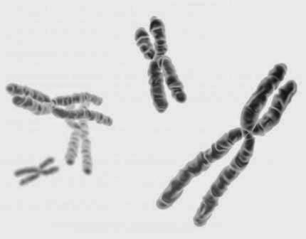 Pengertian Kromosom: Apa itu Kromosom?