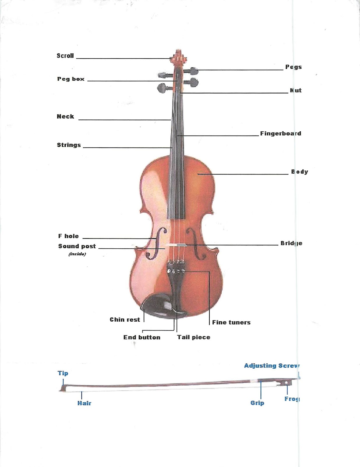 Miss Jacobsons Music Violin Parts Of The Violin