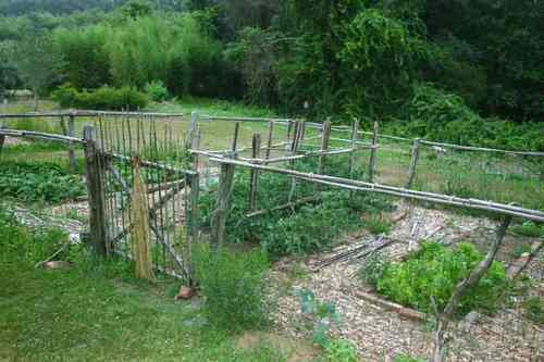 Bamboo Garden Fencing5