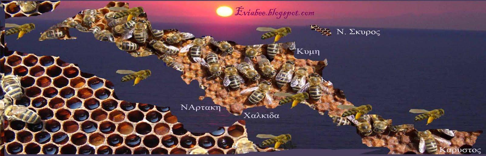eviabee.blogspot.com/
