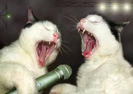 kucing sedang konser
