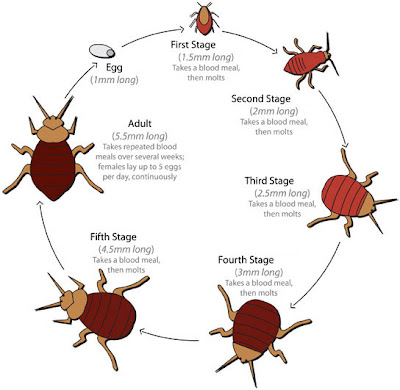http://bedbugs-killing.blogspot.com/