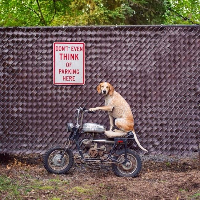 Даже не думайте о том, чтобы парковаться здесь!