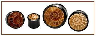 Ammonite Fossil Ear Plug Alargador de Fossil