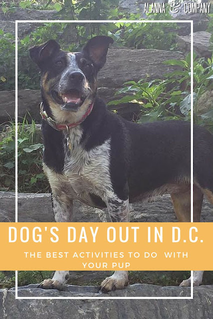 Dog friendly places in DC and Northern Virginia