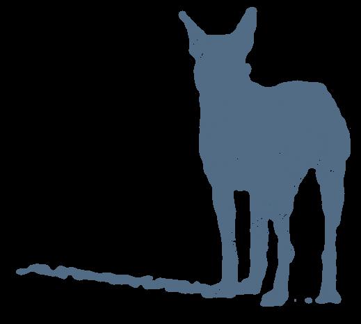 犬の後ろ姿(動物)