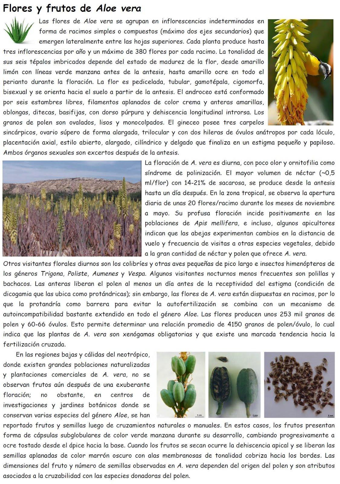 Flores & Frutos de Aloe vera