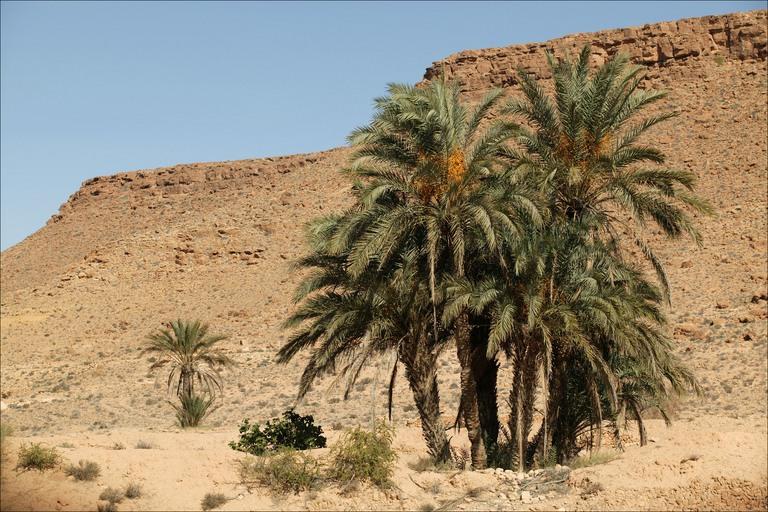 sahara desert of north africa