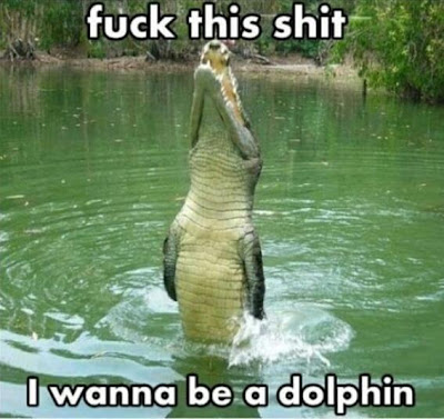 Wanna Be Dolphin