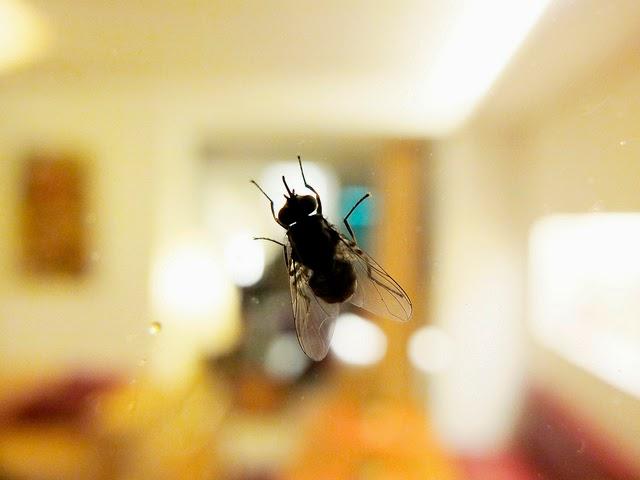 Kisah Inspiratif : Lalat Dan Semut