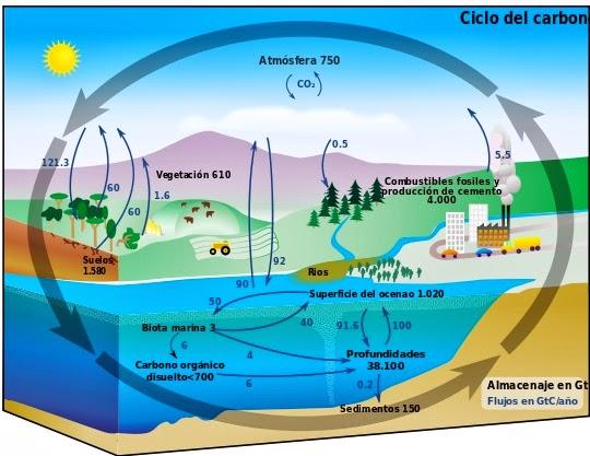 El cicle del carboni