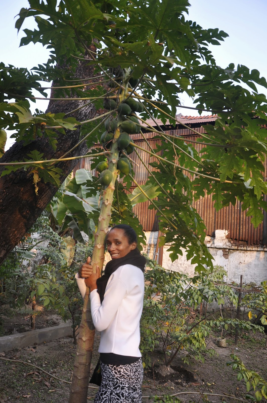 A papaya tree hugger from Germany