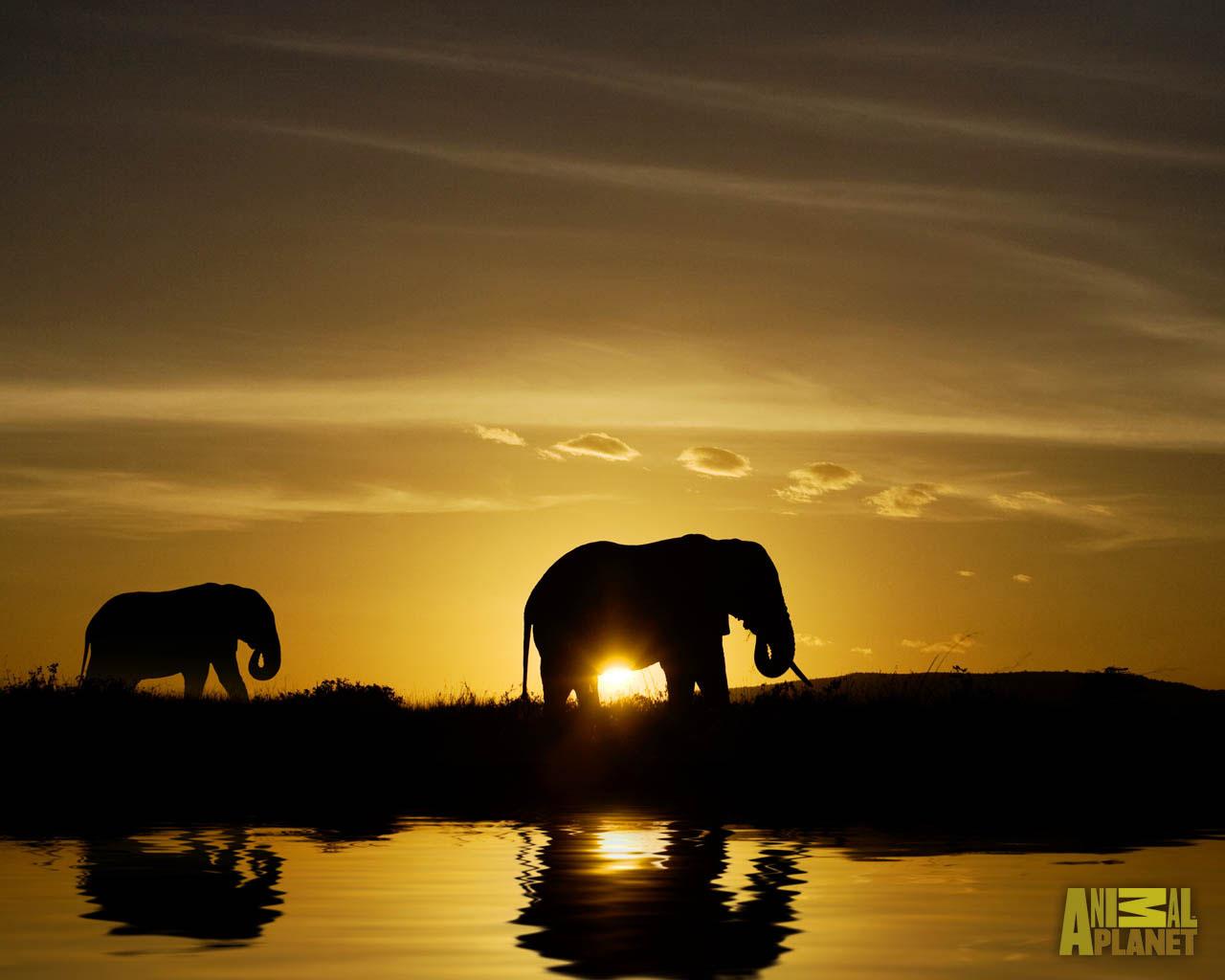 Beautiful OF Elephant In HD