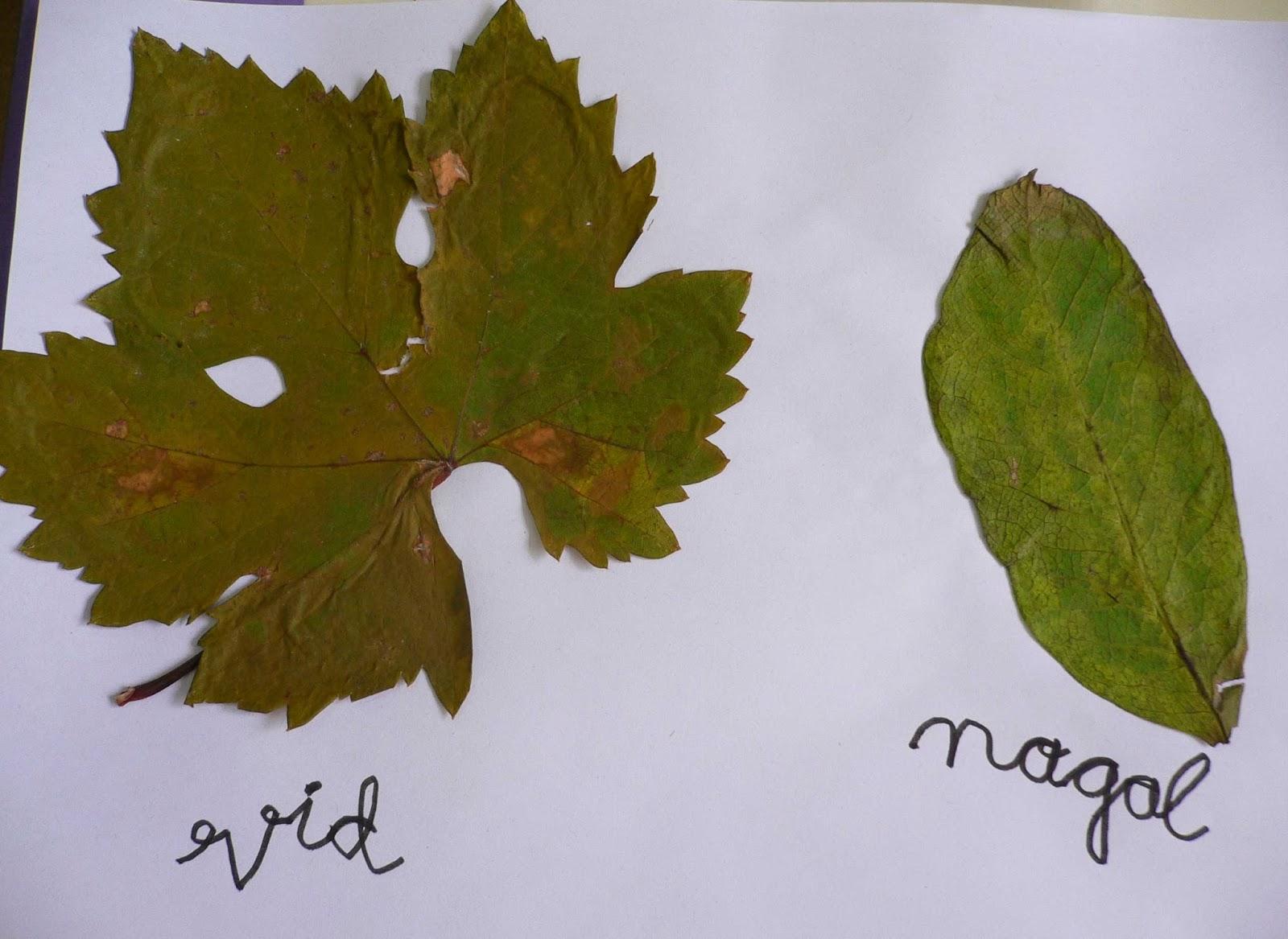Descubriendo y creando juntos naturaleza for Arboles de hoja perenne con sus nombres